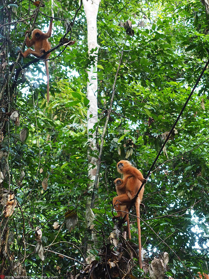 Mr and Mrs Romance - a quick itinerary for Sabah Borneo - Danum Valley Rainforest Lodge
