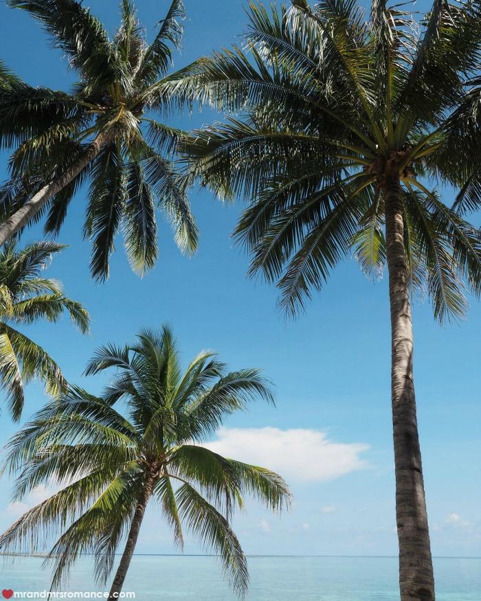 mr-mrs-romance-ig-edition-55-palm-trees