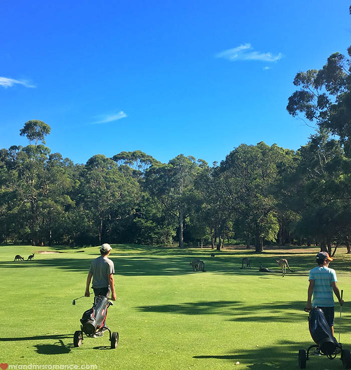 Mr & Mrs Romance - IG Edition - Port Stephens Kangaroos on the golf course