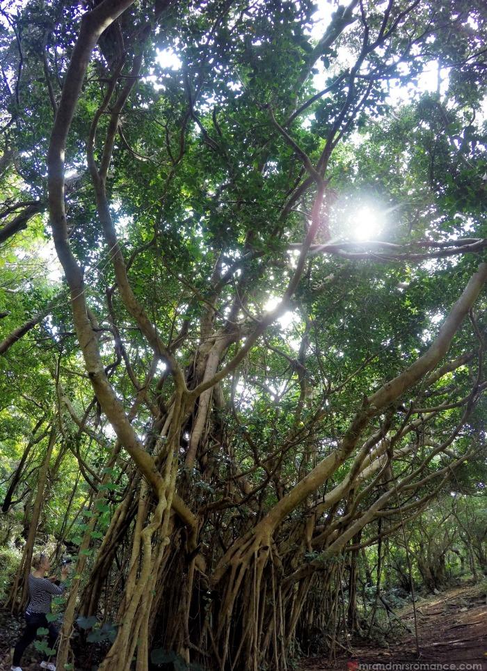 Mr & Mrs Romance - IG Edition - 9d Daisekirinzan banyan tree