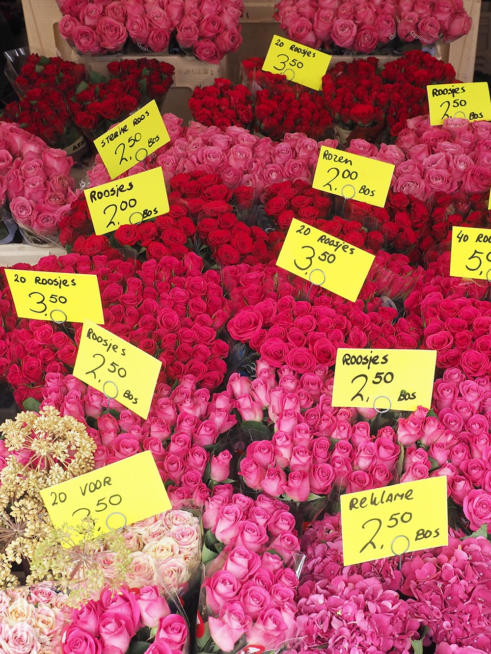 Visit Rotterdam travel guide - MMR - peonies