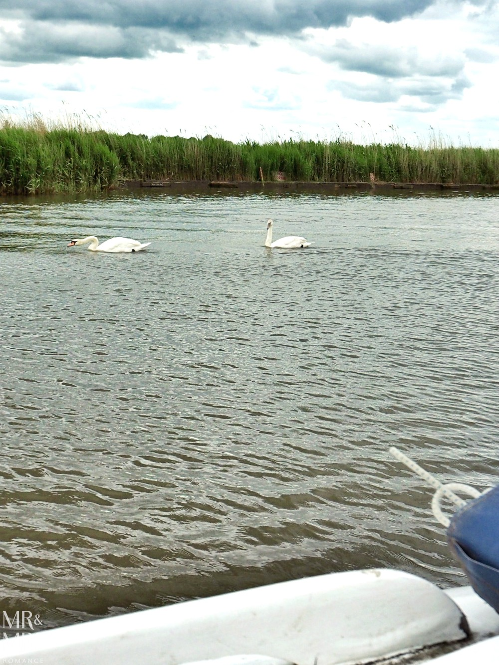 Boating holidays England - Norfolk Broads boat hire swans