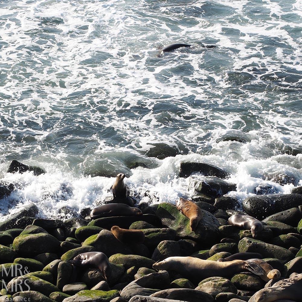 Sea lions La Jolla San Diego California