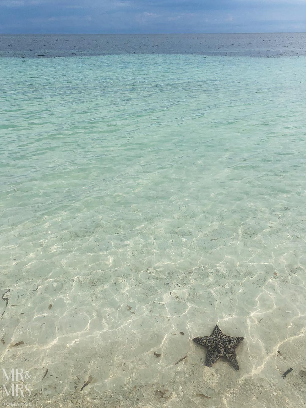 Cayo Levisa, Cuba - starfish