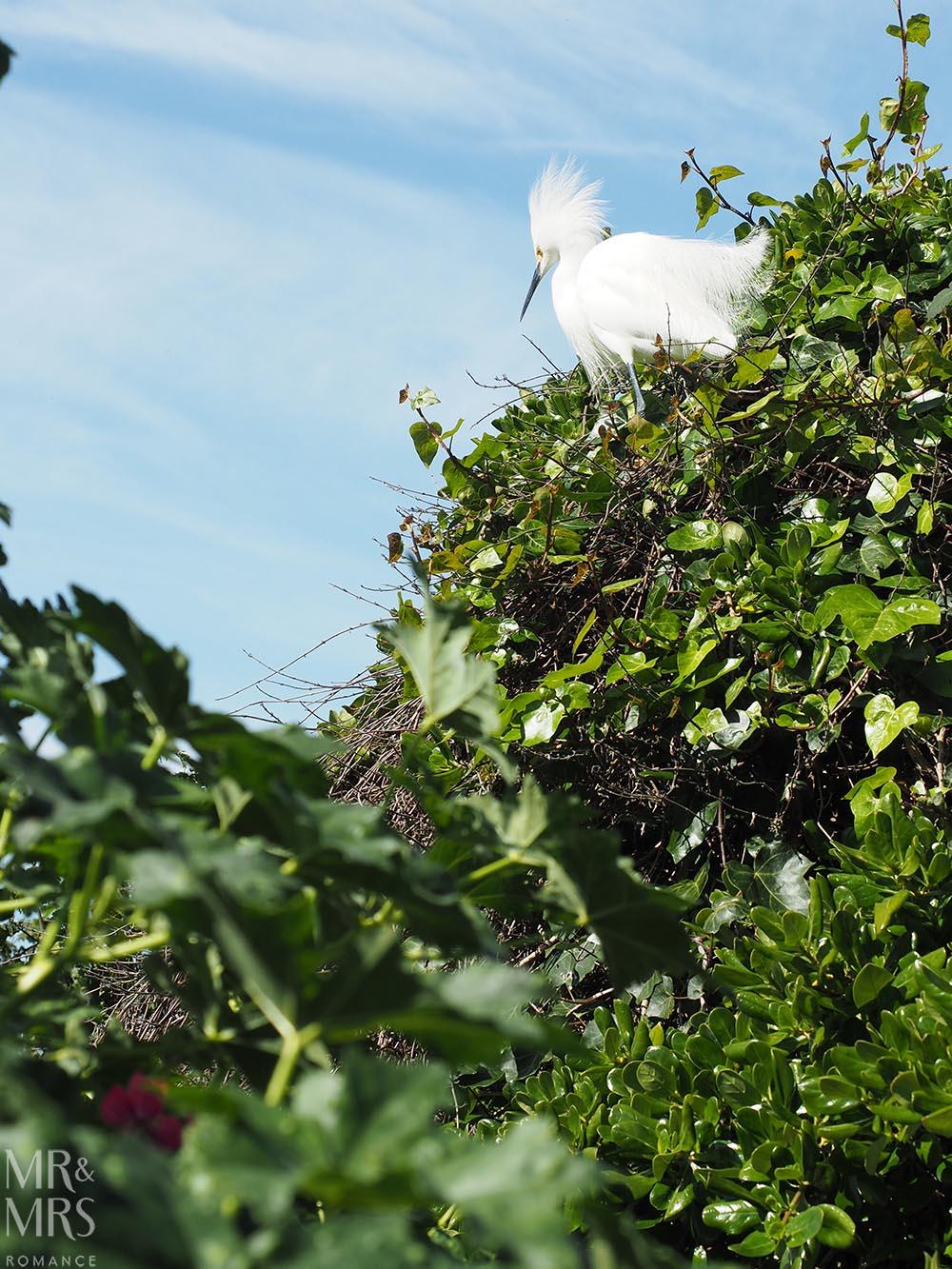 Alcatraz Island Snowy Egret