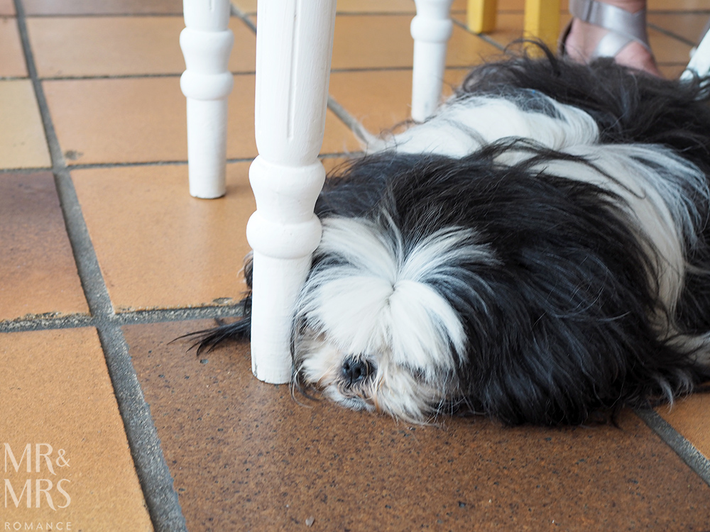 Puppy at Restaurant Beau Sejour Gorbio - Mr & Mrs Romance