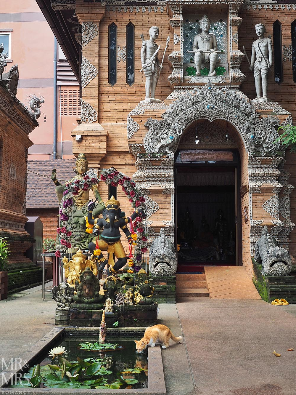 Bangkok and Chiang Mai, Thailand - Weekly Edition - temple cat