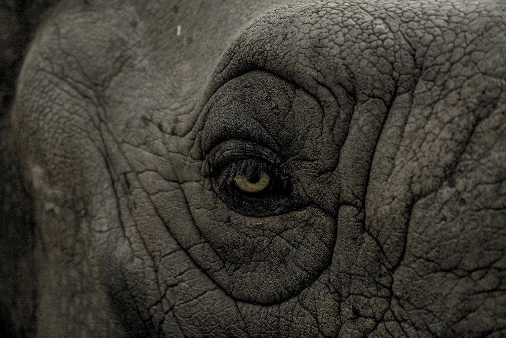Elephant sanctuaries Thailand - elephant eye