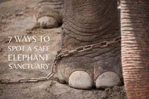 7 ways to spot a safe elephant sanctuary