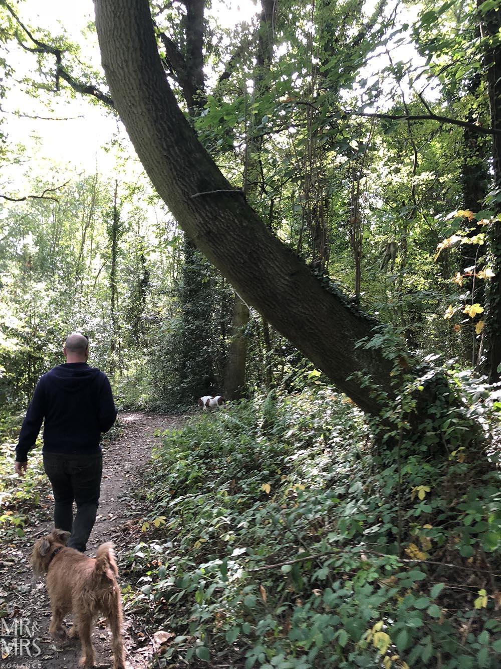 Norfolk, Suffolk, Sussex, Essex - Wivenhoe woods