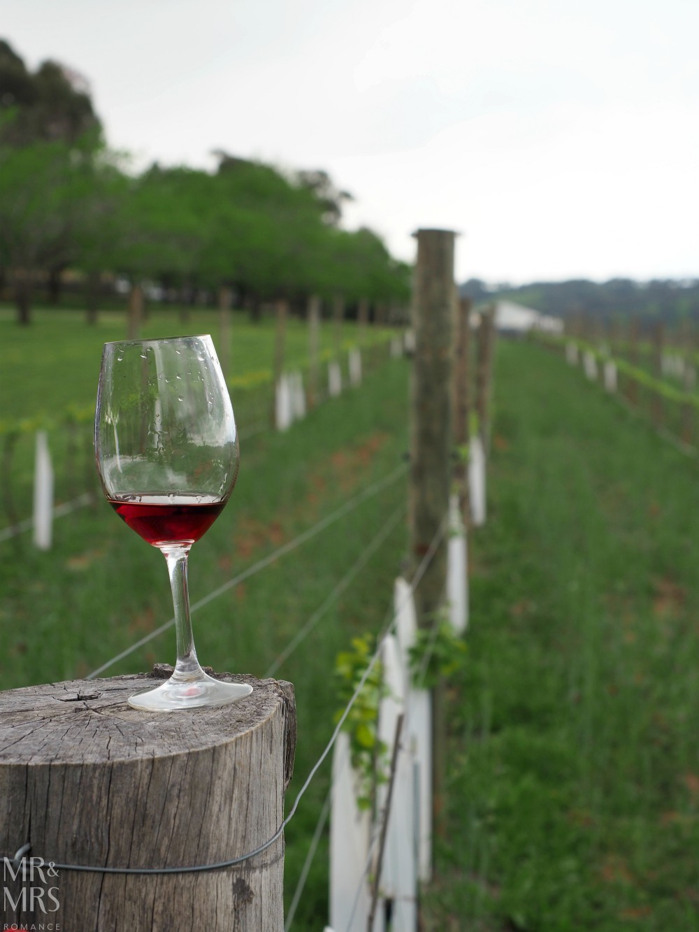Orange Wine Festival - Stockman's Ridge wine in the vines