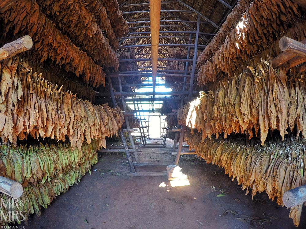 Horse riding in Cuba - Vinales - inside drying barn