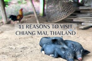 11 reasons to visit Chiang Mai, Thailand