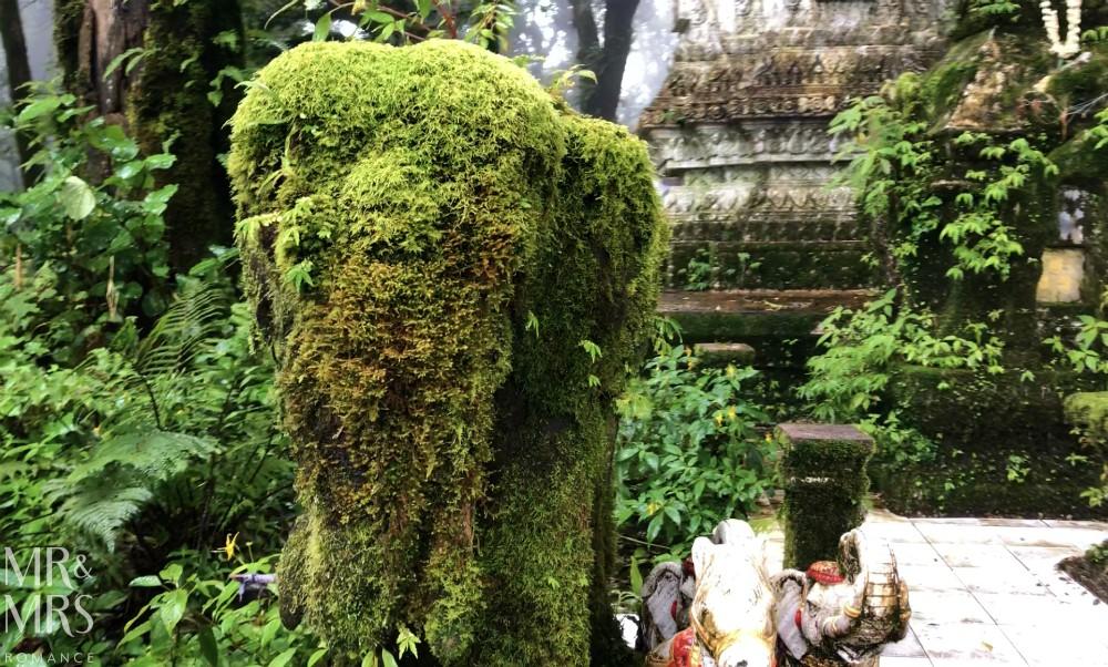 Visit Chiang Mai - Doi Inthanon elephant