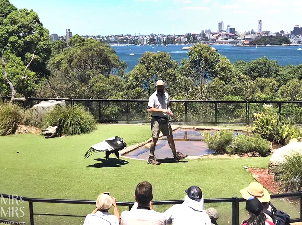 Taronga Zoo - bird show condor