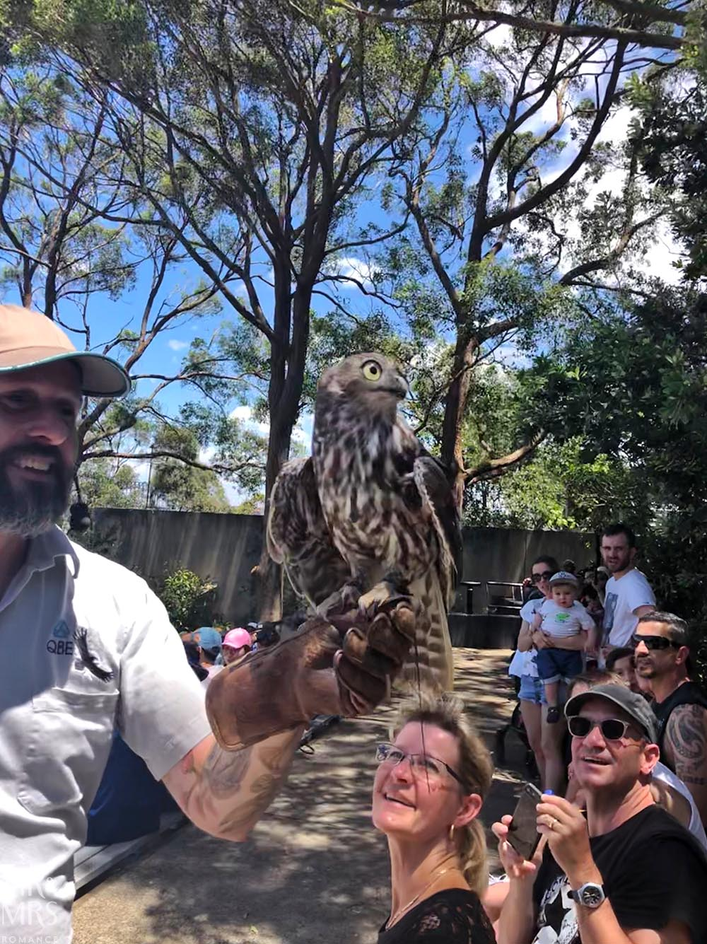Taronga Zoo - bird show owl