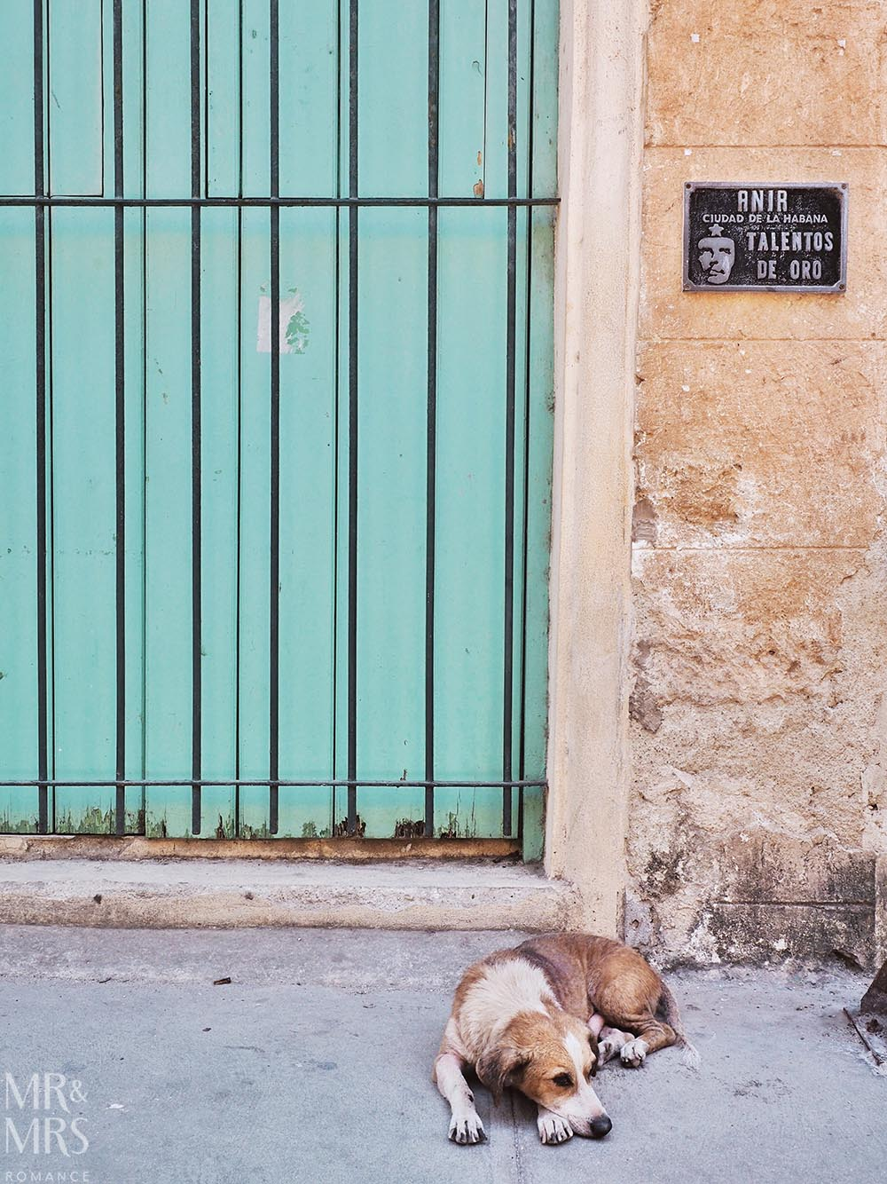 Street dog Havana Cuba