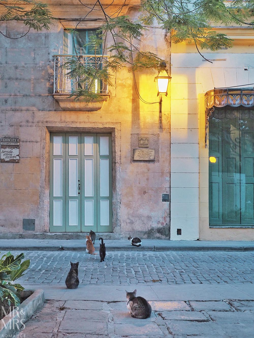 Cats in old Havana Cuba