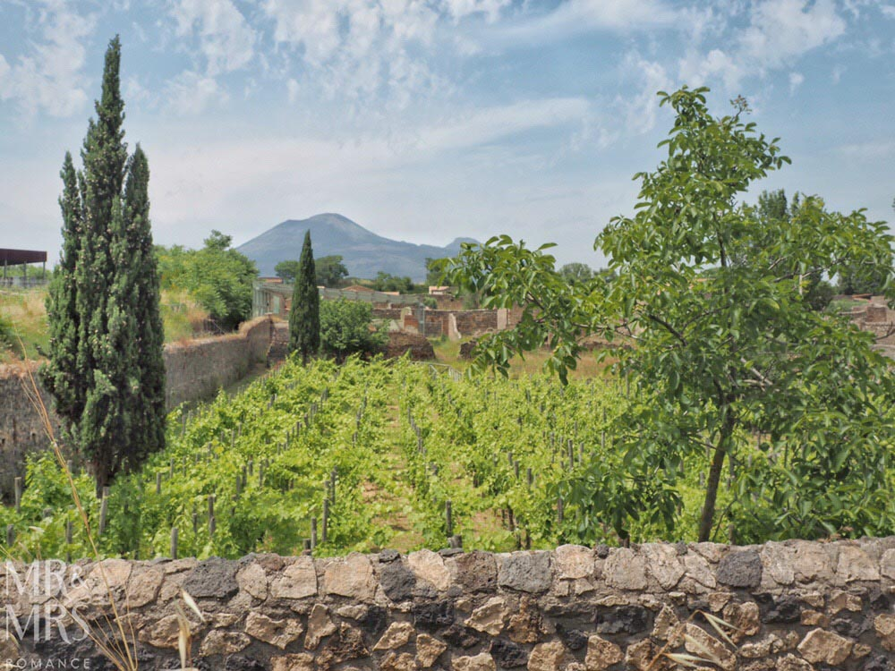 Pompeii DIY tour - how to get the most out of Pompeii - vineyard