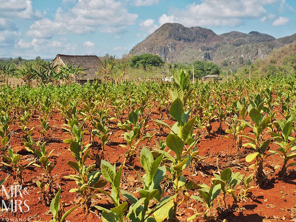 Honeymoon itinerary Cuba - Vinales Tobacco Field