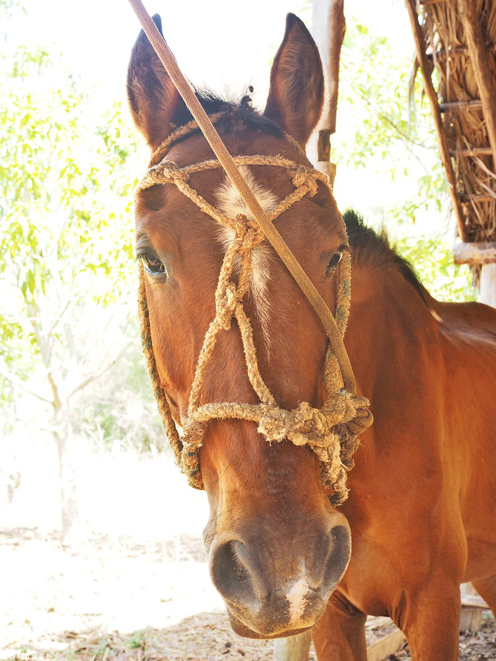 Honeymoon itinerary Cuba - Vinales horse riding