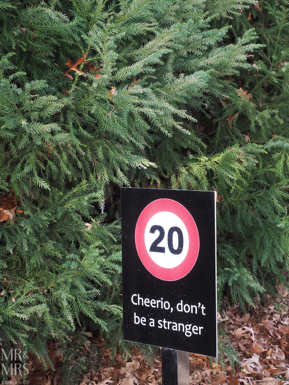 speed limit and funny sign