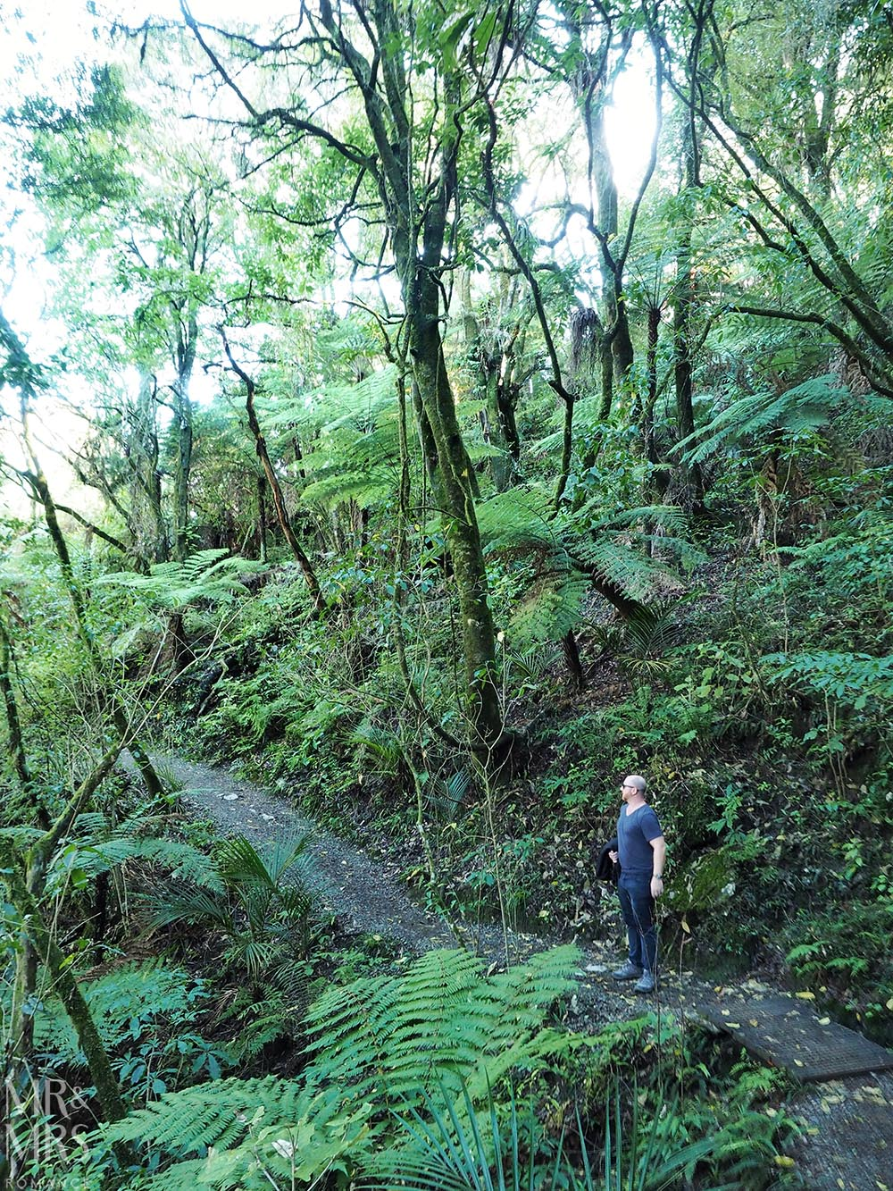 New Zealand Waitomo glowworm cave and Blackwater Rafting - bushwalk
