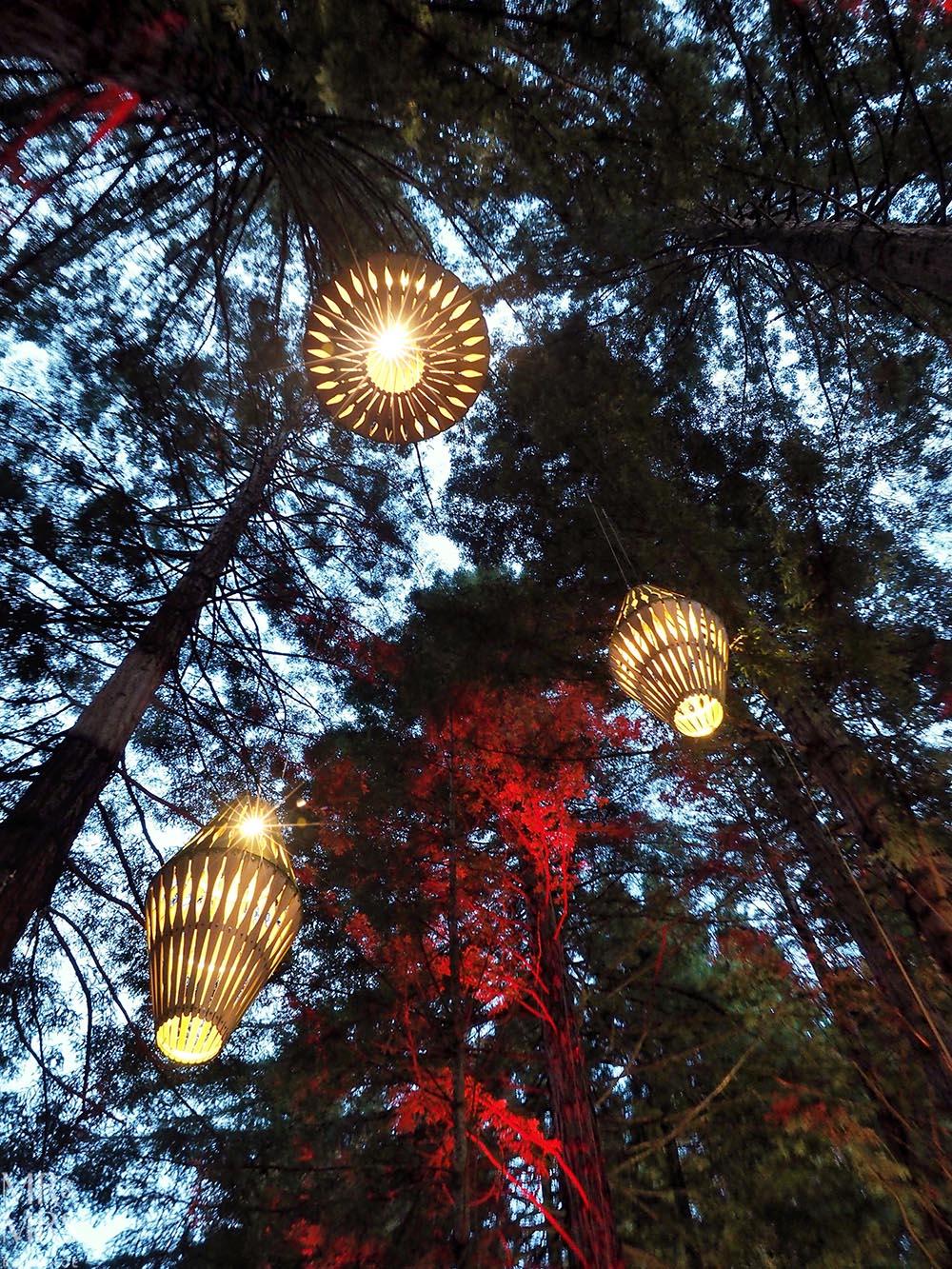 Redwoods Treewalk, Rotorua, New Zealand - Nightlights by David Trubridge