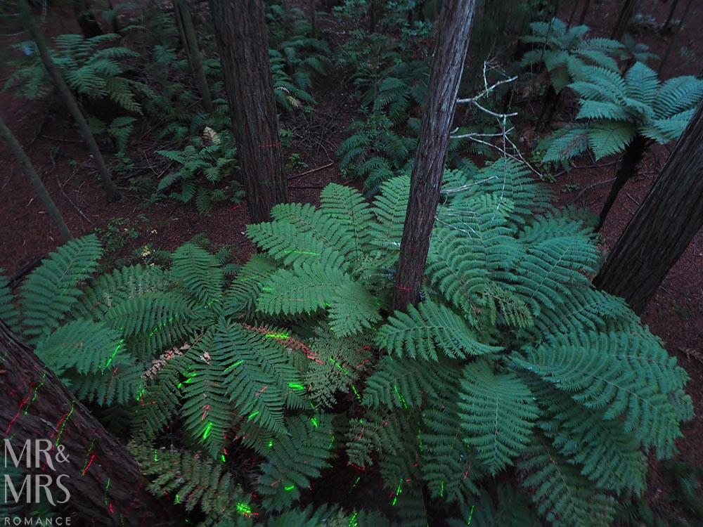 Redwoods Treewalk, Rotorua, New Zealand - forest floor