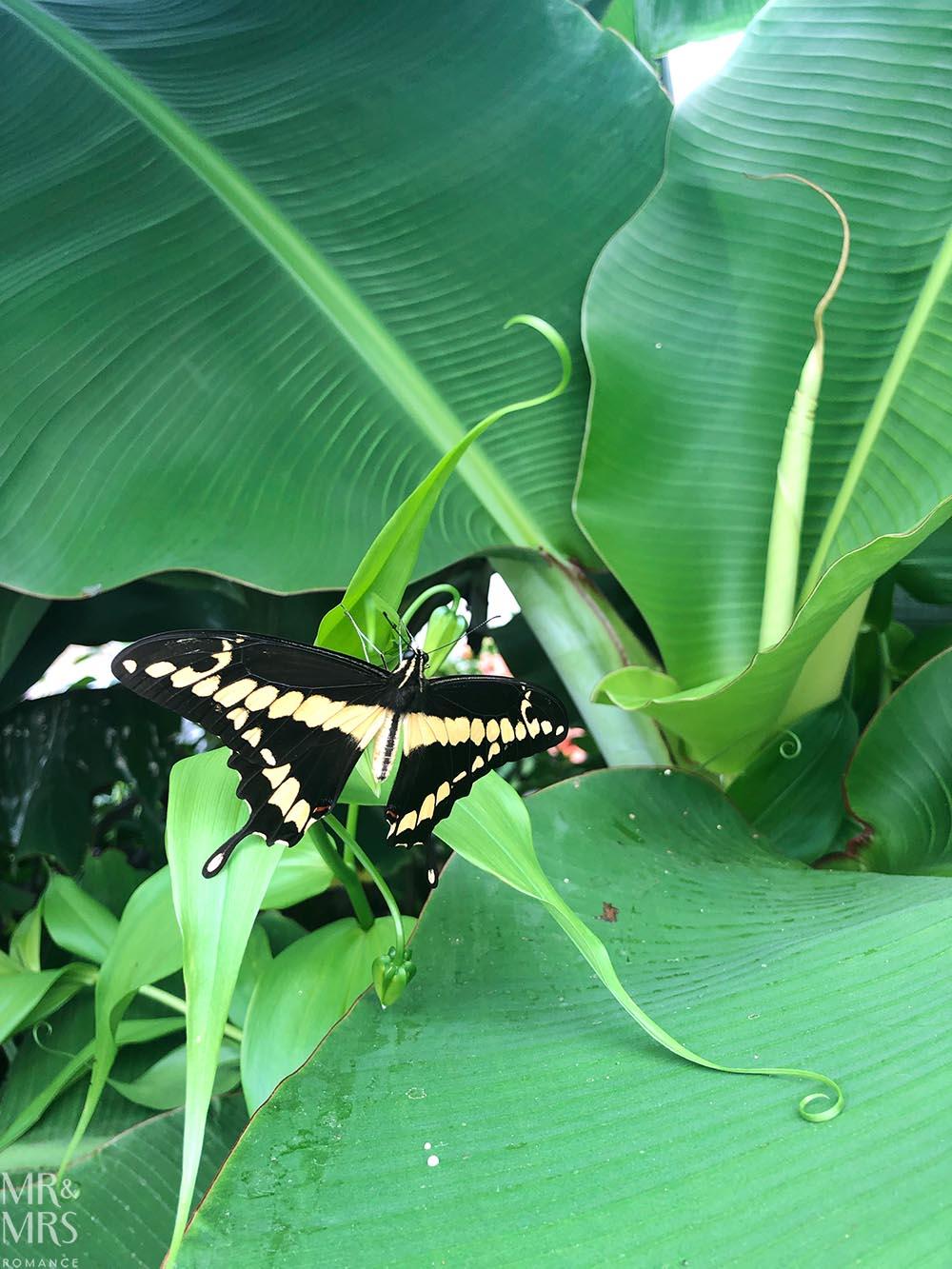 Blenheim Palace Pleasure Gardens butterfly house