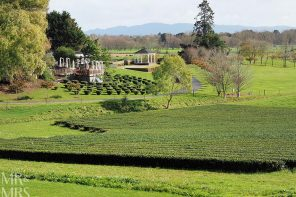 New Zealand to a tea – Zealong Tea Estate, Waikato