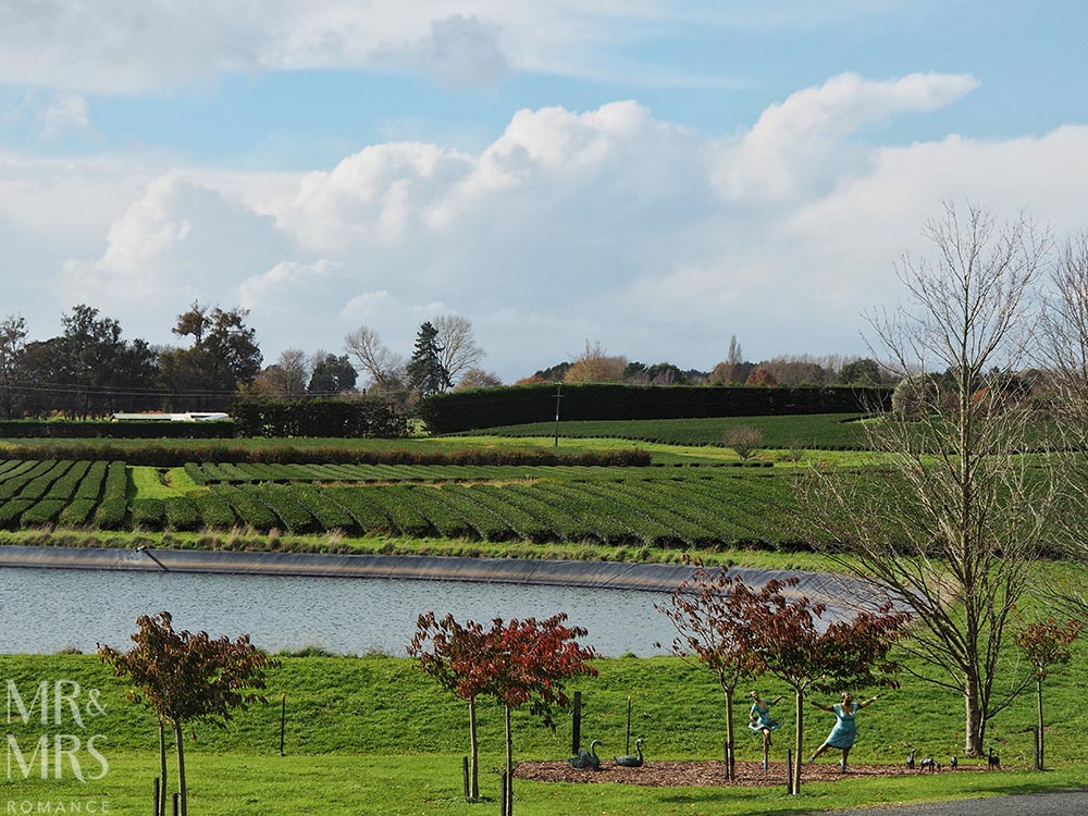 Zealong Tea Estate, Hamilton, Waikato, New Zealand