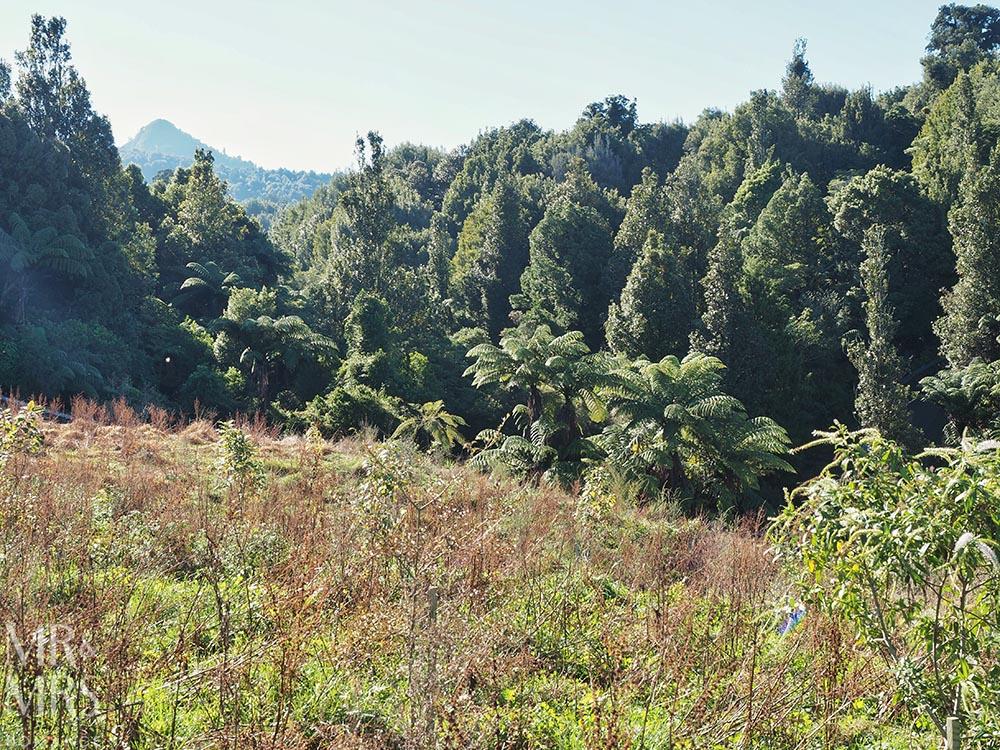 Sanctuary Mountain, Waikato, New Zealand