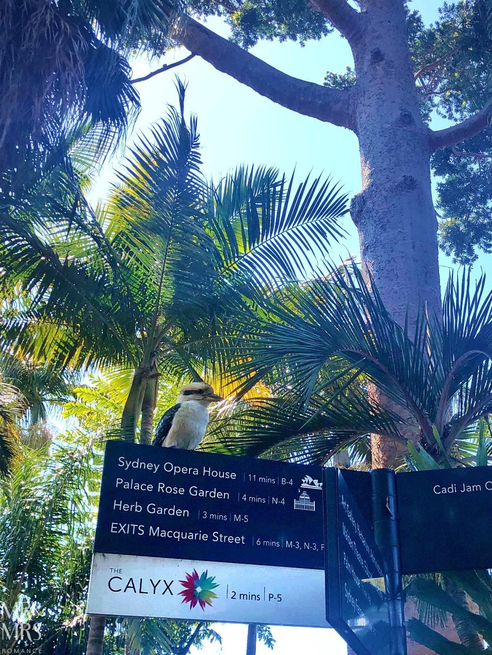Botanic Gardens, Sydney with kookaburra