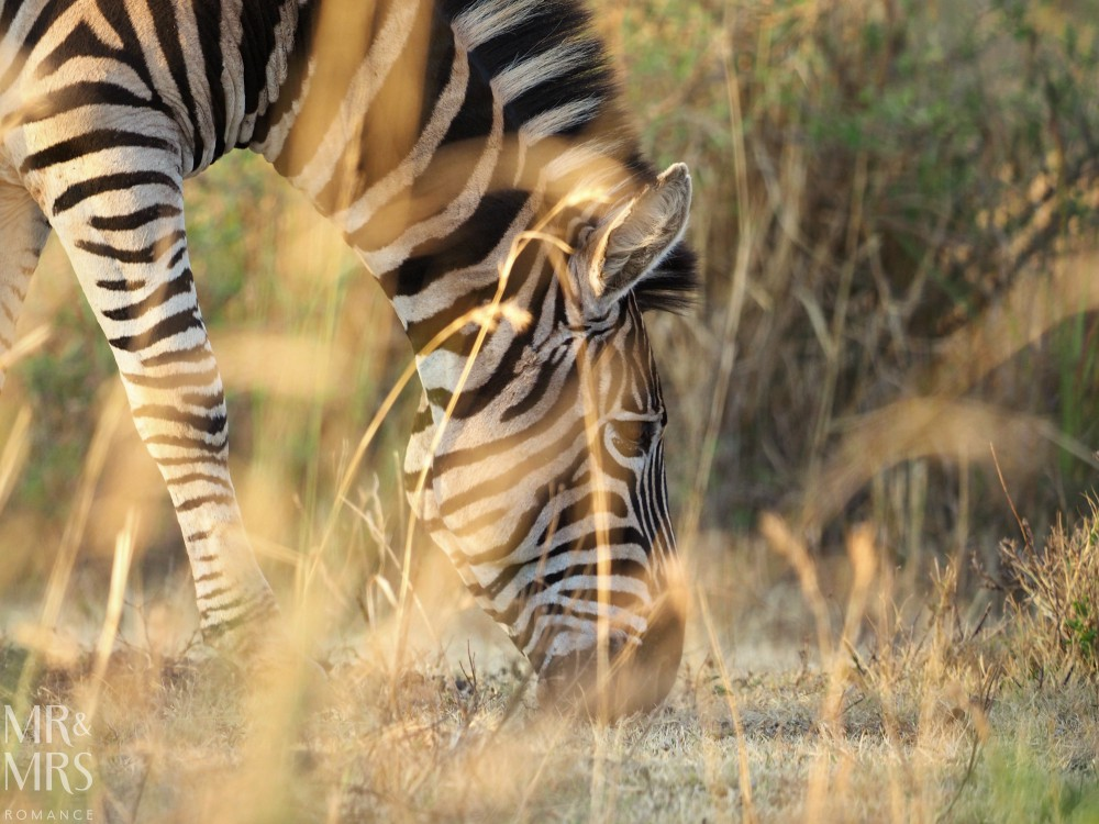 Visit South Africa - zebra Fugitive's Drift Lodge Park