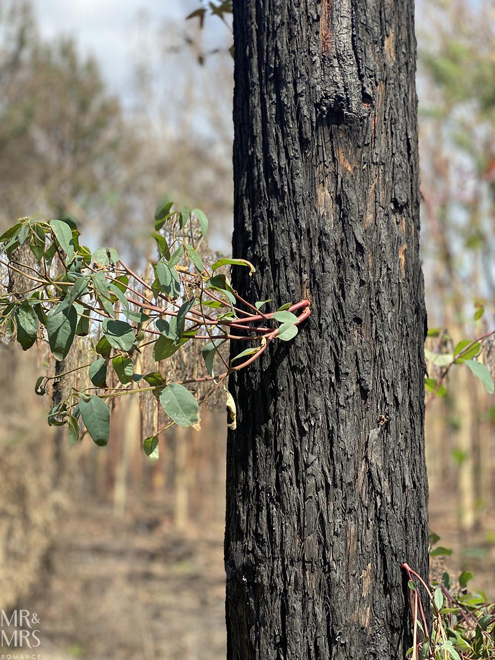 Australia bushfire regrowth