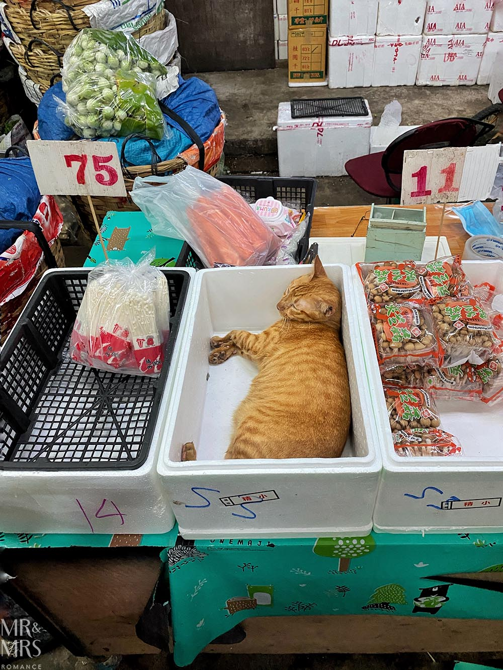 Bangkok Flower Market - cats of instagram