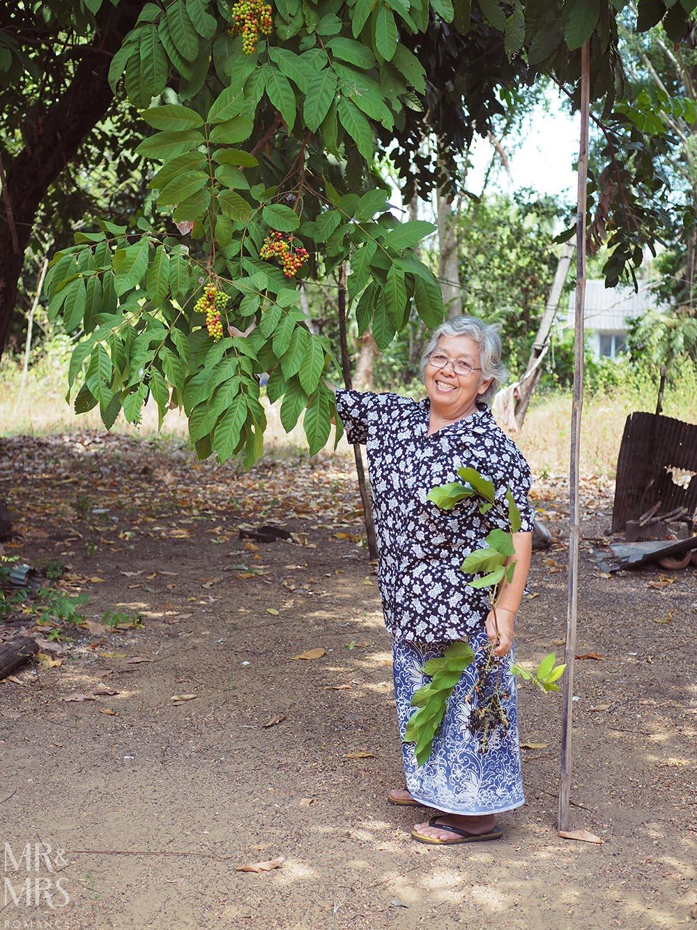 Koh Klang, Thailand - cashew tree