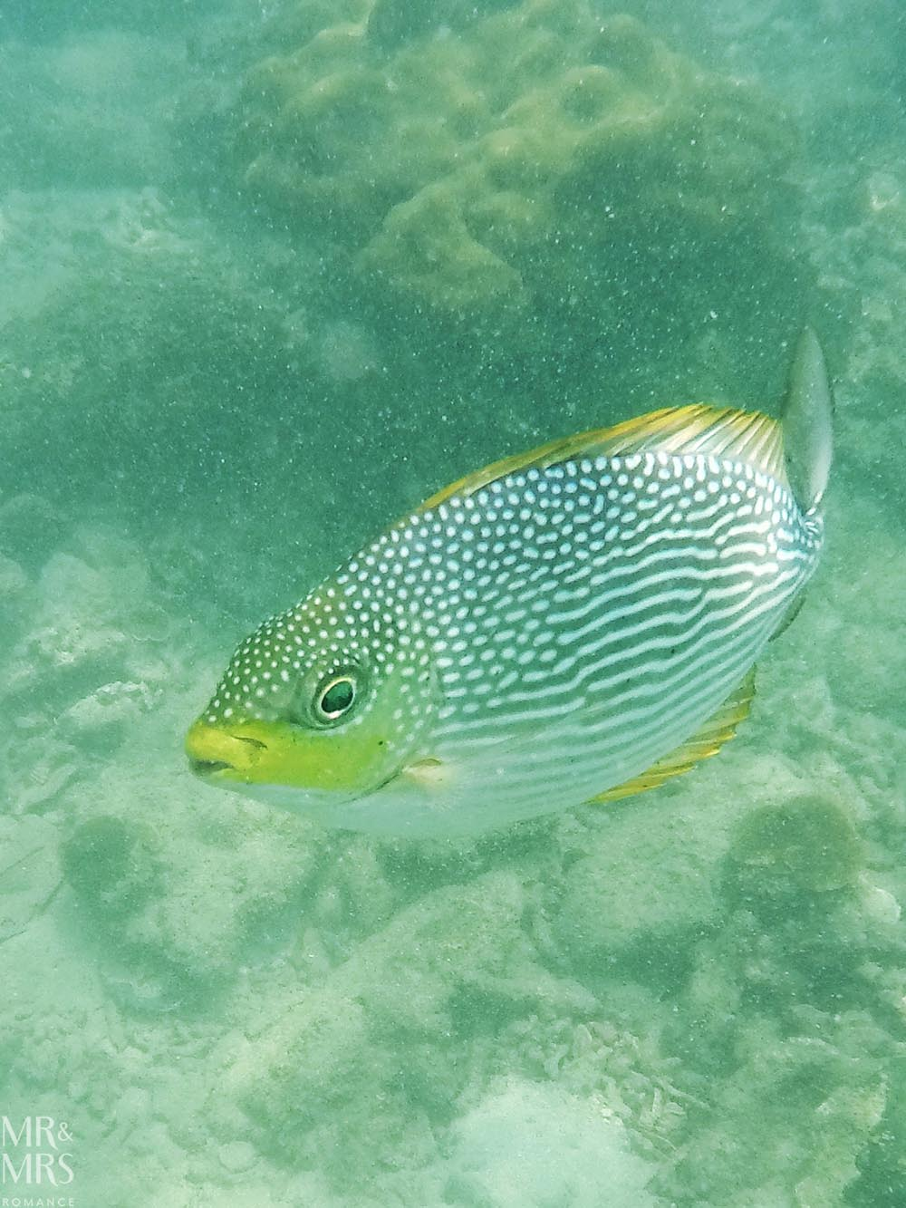 Island-hopping Krabi, Thailand private speedboat yellow banded sweetlips