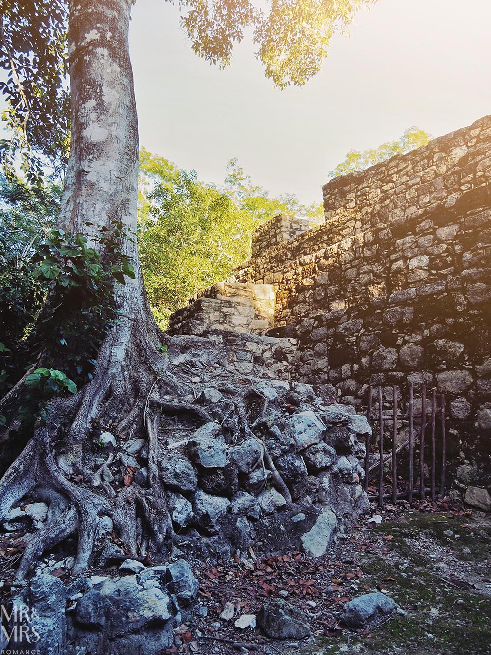 Mayan ruins in Mexico - tree and temple in Tulum