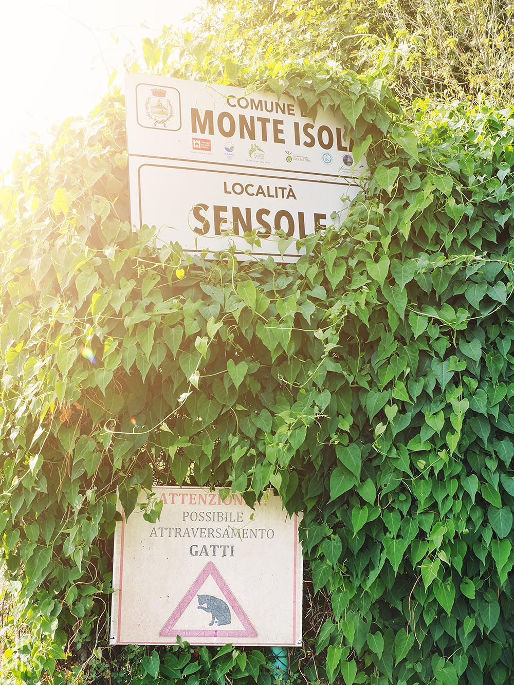 Monte Isola, Lake Iseo, Italy - road sign for cats