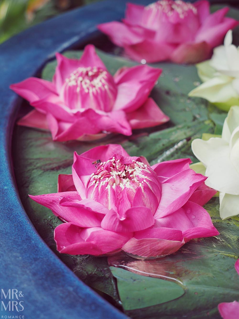 Jim Thompson House, Bangkok - lotus flowers