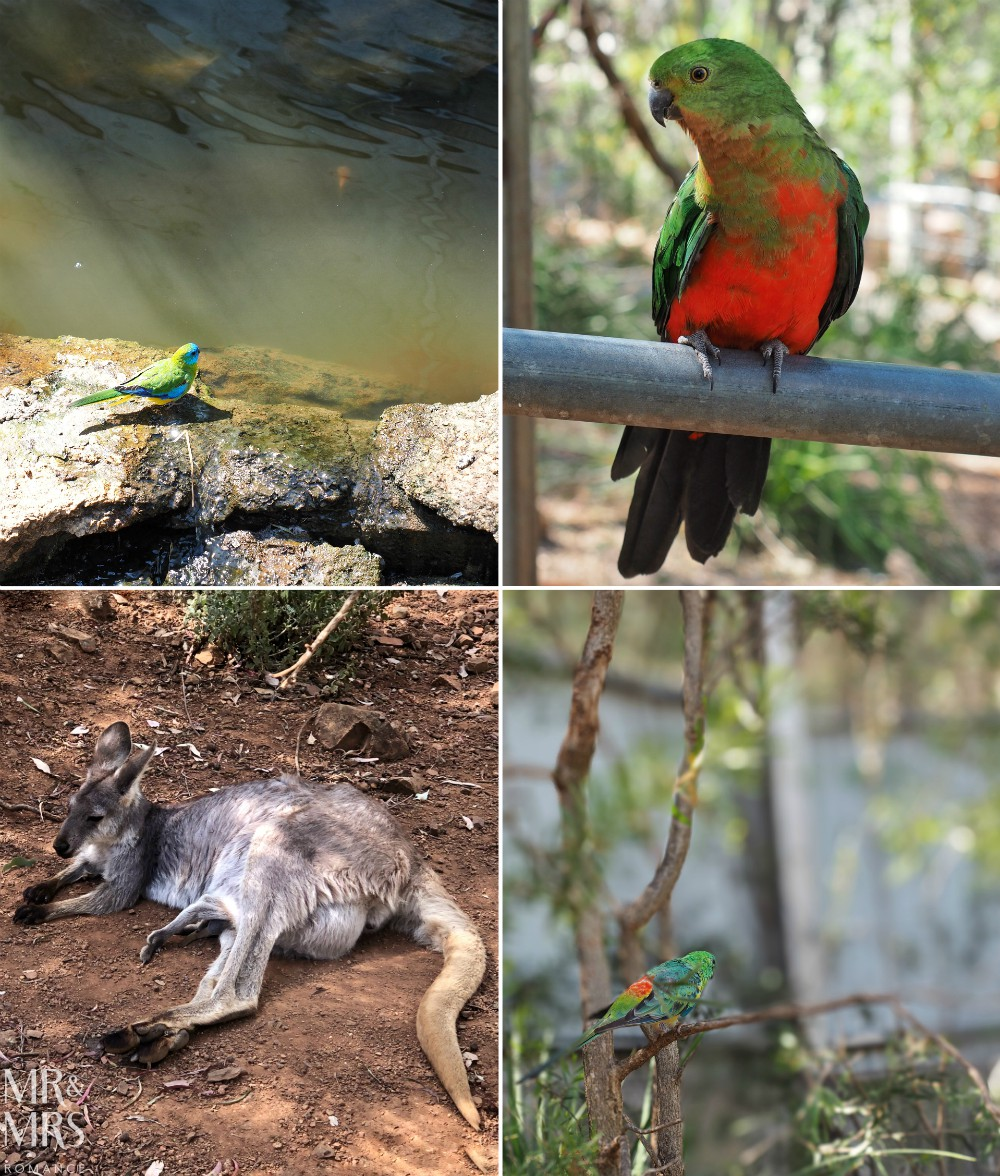 Collage of wildlife at Tamworth Marsupial Park