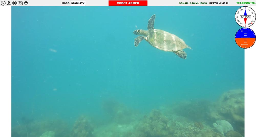 Teleportal drive your own underwater drone on the Great Barrier Reef - turtle