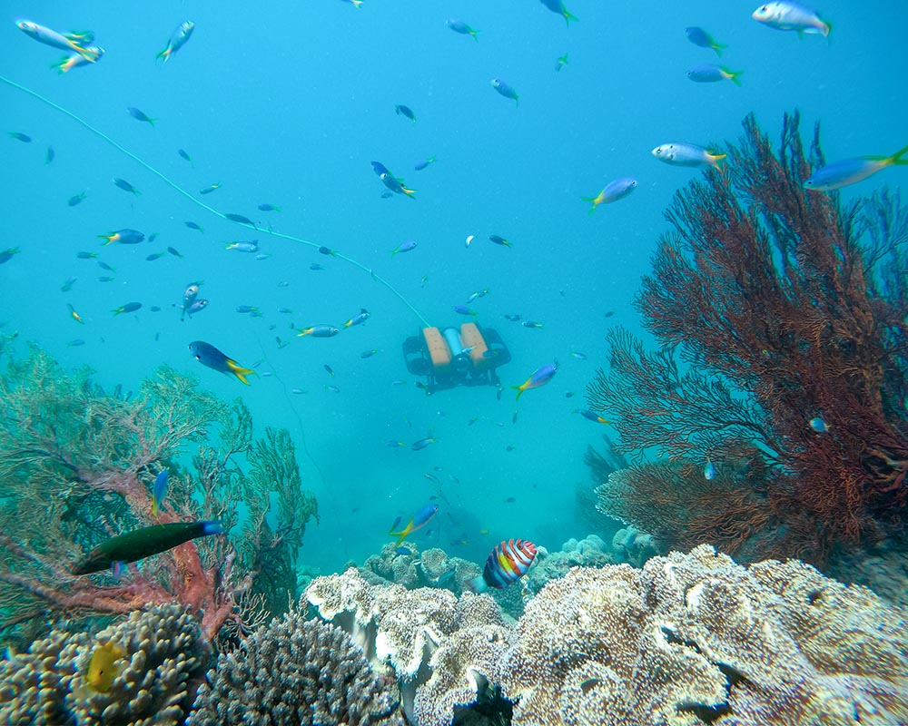 Teleportal drive your own underwater drone on the Great Barrier Reef - Alvin