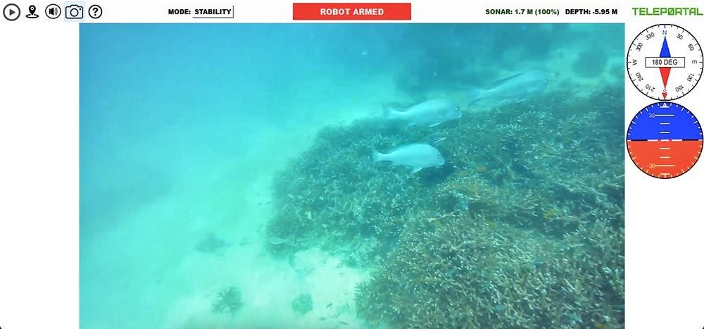 Teleportal drive your own underwater drone on the Great Barrier Reef - big fish