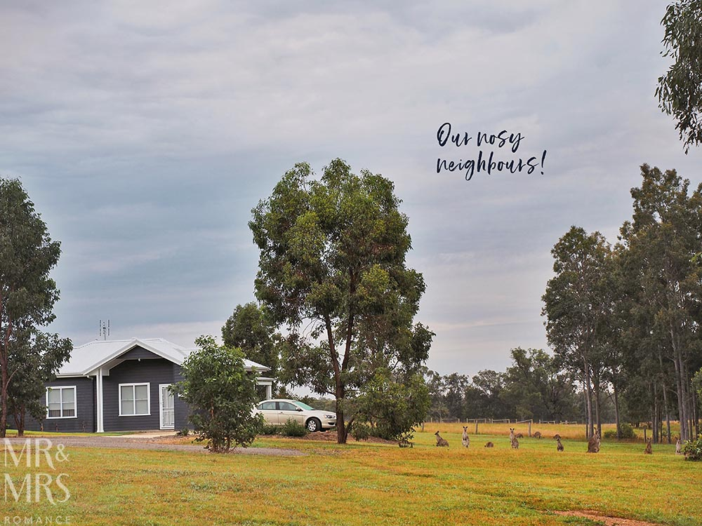 Where to stay in the Hunter Valley - Aldora Cottage in Jindalee Estate, Pokolbin hotel review - nosy neighbours