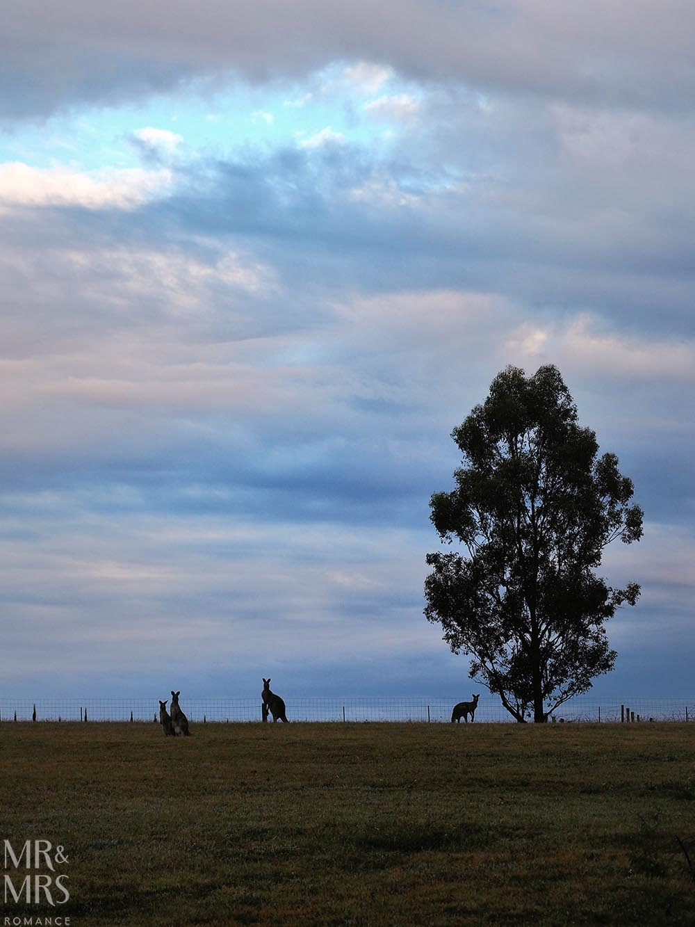 Where to stay in the Hunter Valley - Aldora Cottage in Jindalee Estate, Pokolbin hotel review - roos on the ridge