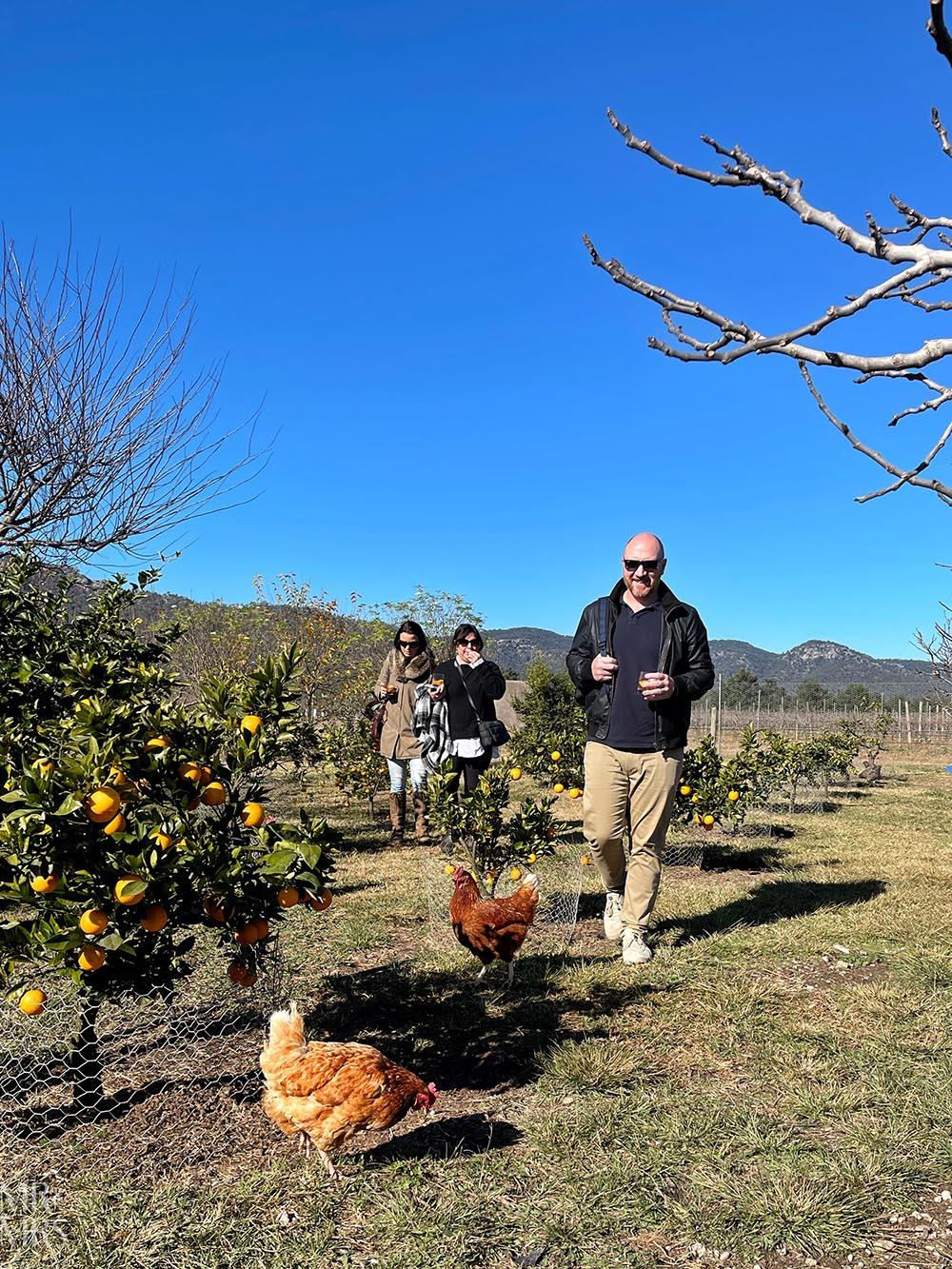 Margan Wines Hunter Valley Winery - kitchen garden